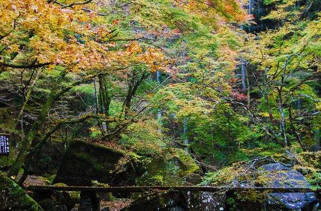 紅葉と橋きれい